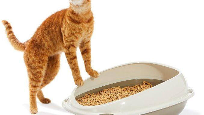 bästa luktfria kattsanden test