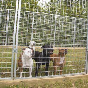 Stor hundgård för större hundar