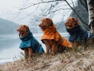 regntäcke bäst i test hund