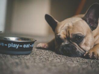 hundfoder bäst i test