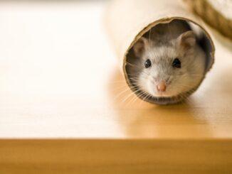 Bästa hamsterburen
