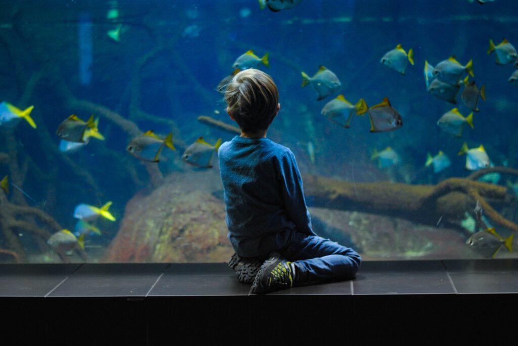 Köpa akvarium